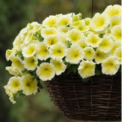 Petunia Easy Wave Yellow