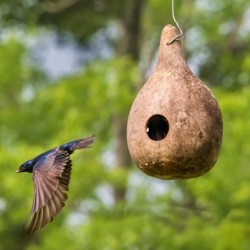Birdhouse Gourd NEW