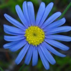 Felicia Sky Blue