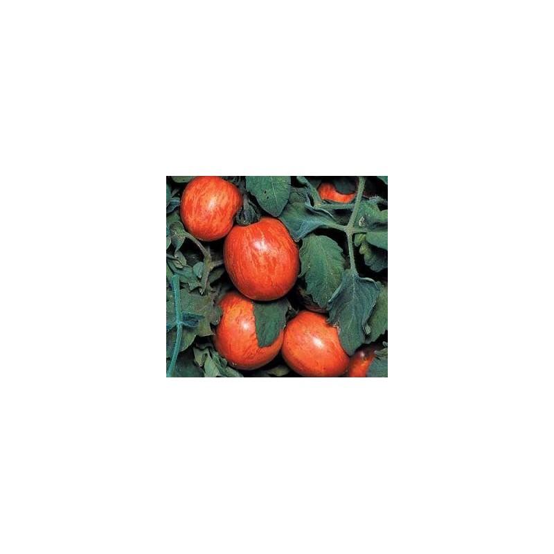 tomato elberta peach.jpg
