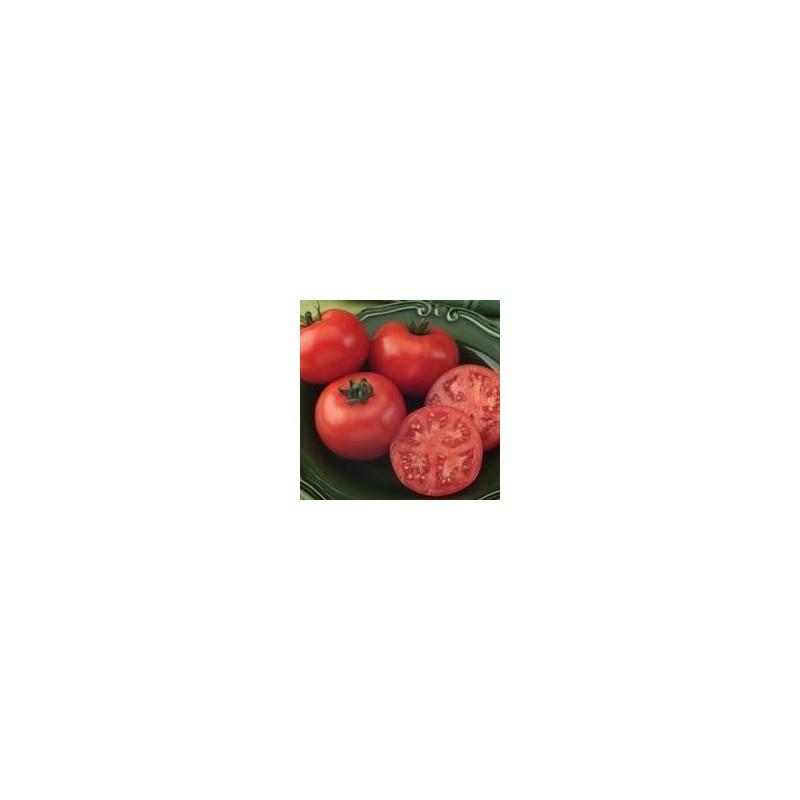 Tomato Bush Champion.jpg