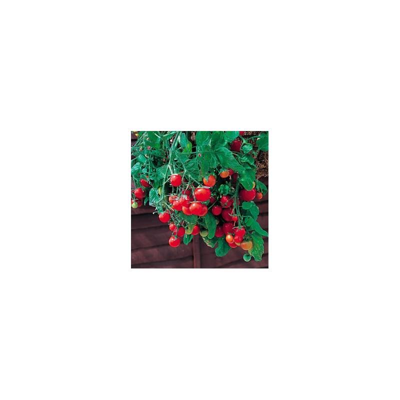tomato tumbling tom red.jpg